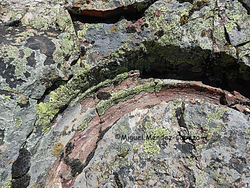 Detalle de la huella del trilobites en el fósil de Las Moradas