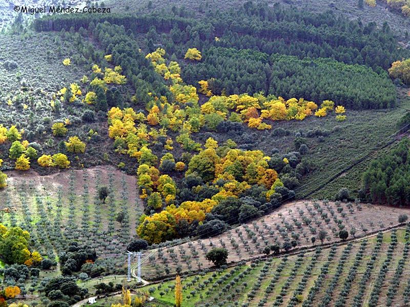 Los cultivos se fueron asentando tras rozar el monte bajo y los bosques de La jara
