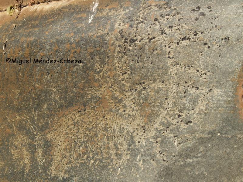Ciervo con su cornamenta de los grabados rupestres de El Martinete