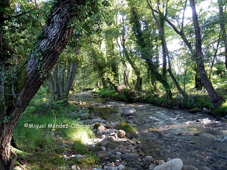 Bosque de ribera en la Garganta de Chilla