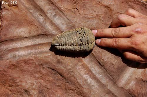 Simulación del paso del trilobites dejando su huella (Foto CSIC)