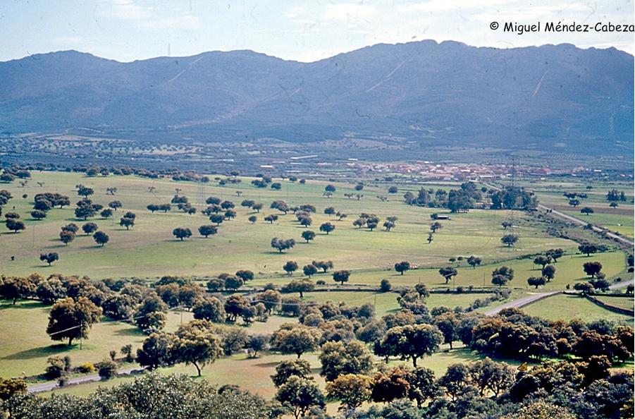 Se fueron adehesando las mejores tierras de cultivo en llanos y rañas