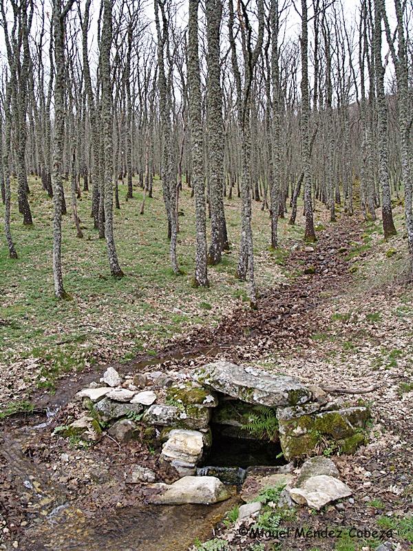 Una fuente en El Piélago en la Sierra San Vicente