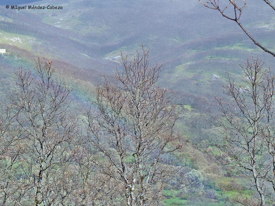 El arco iris en los robledales de El Piélago