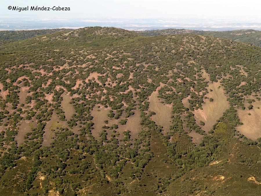 Fragosas sierras de La Jara, despobladas con su bosque mediterráneo impoluto entre casqueras, refugio ideal para partidas de bandoleros