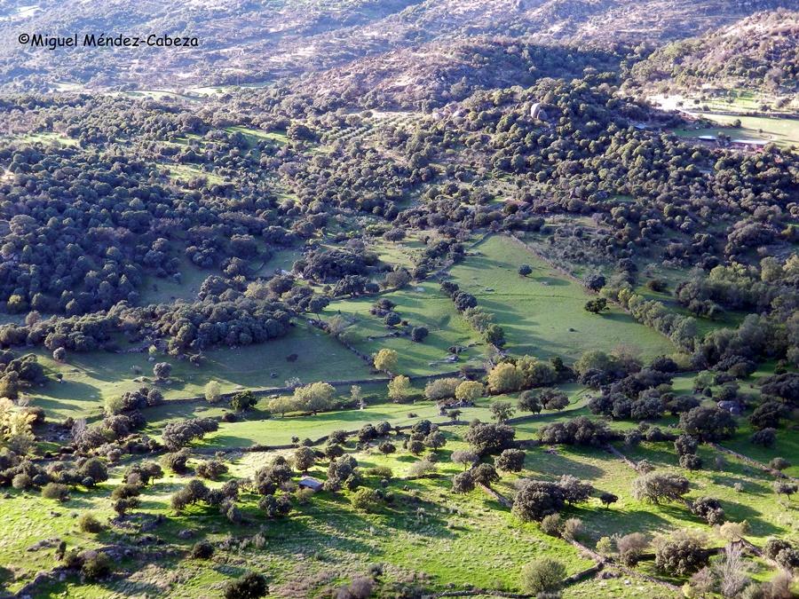 Vista de prados y bosque de encinas y enebros desde el cerro del Castillo