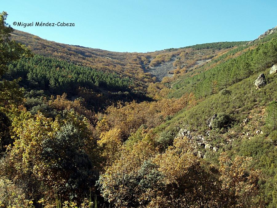Robledales, pinares y castaños en el arroyo de Las Lanchas