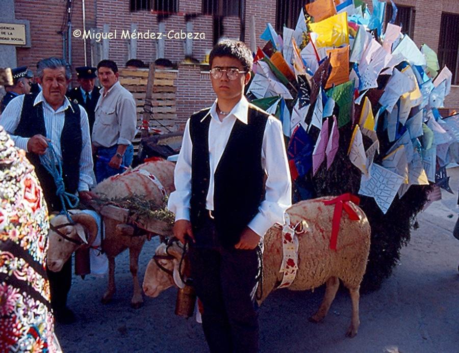 Carro de Mondas tde Gamonal tirado por carneros en el cortejo
