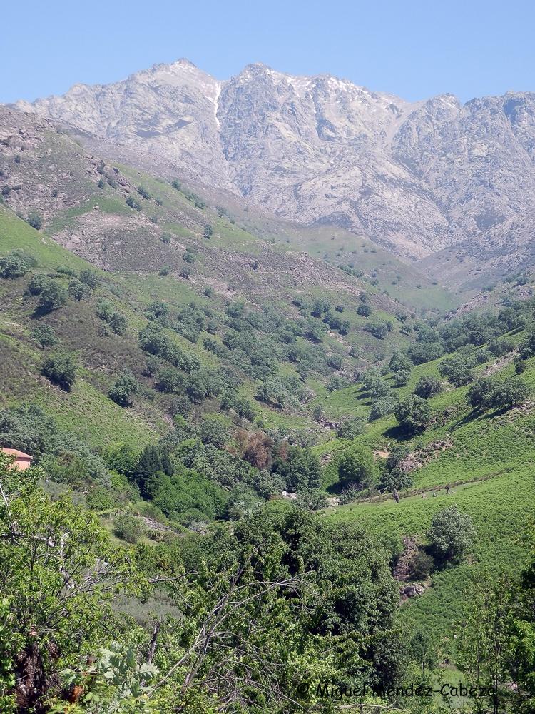Macizo central de Gredos con el Almanzor al fondo