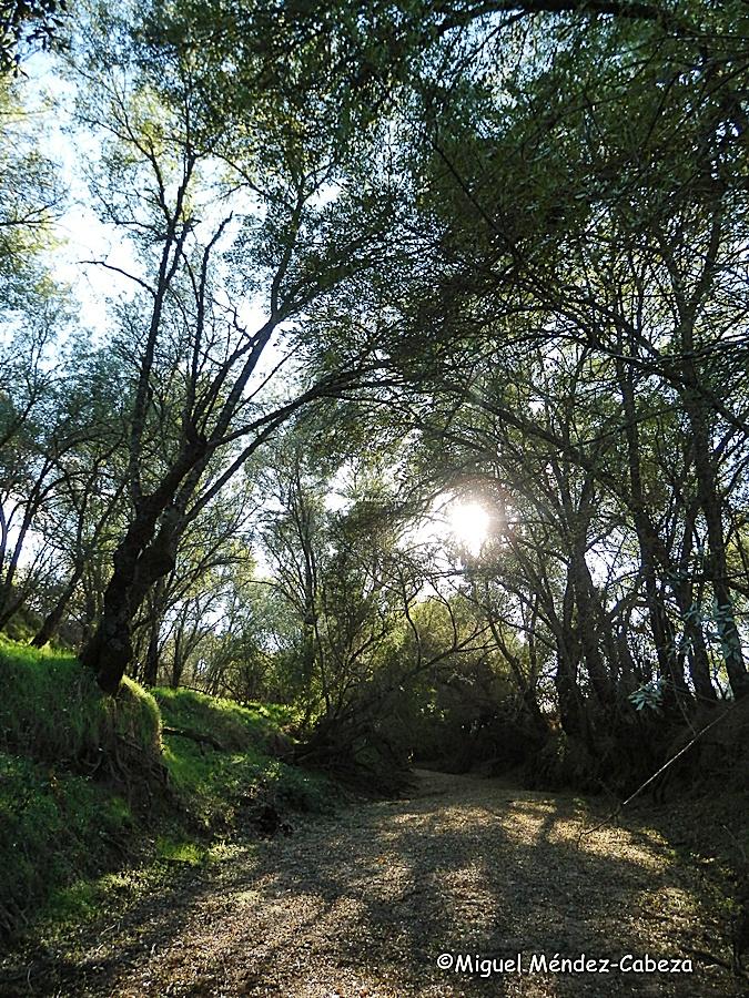 Cauce seco del Guadyerbas por donde se trasladaron las piedras para hacer las fuentes de Cibeles y Neptuno de Madrid