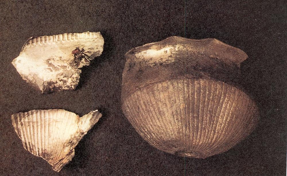 Vasijas orientalizantes de plata halladas en el yacimiento de El Carpio junto al Tajo en Belvís de La Jara