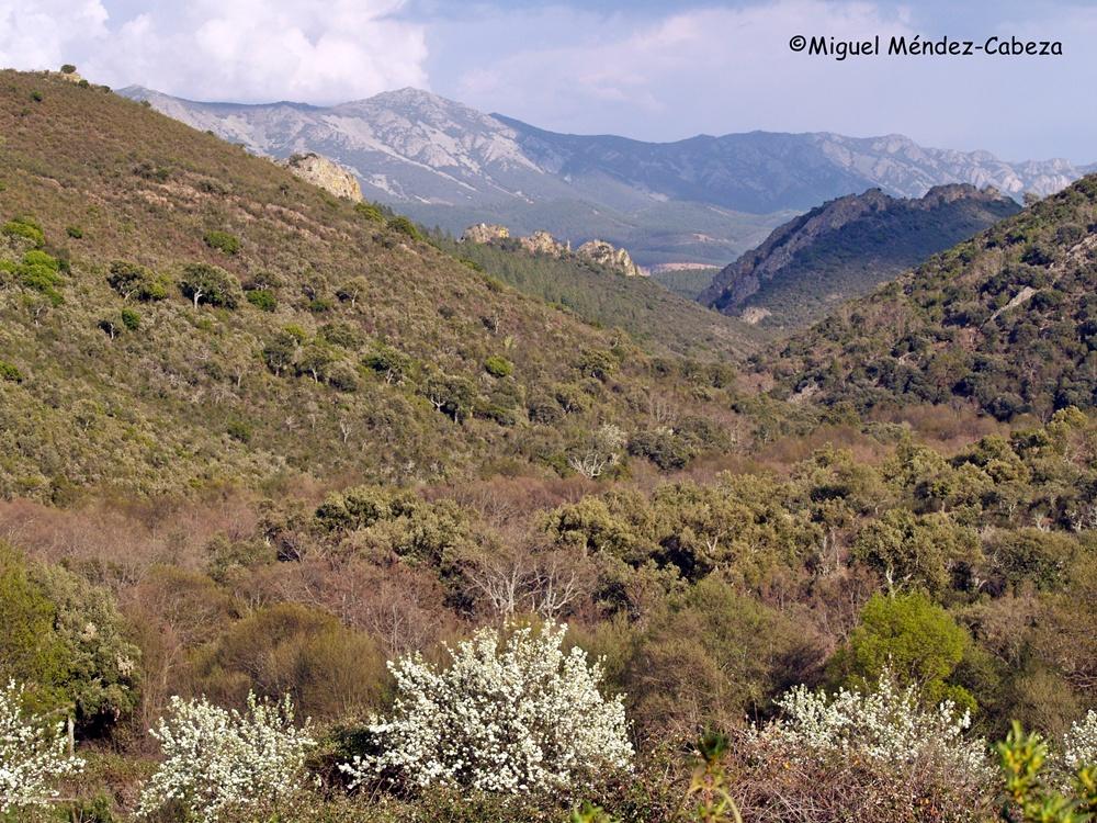 Paisaje en la zona de Los Guadarranques, cerca de Navatrasierra