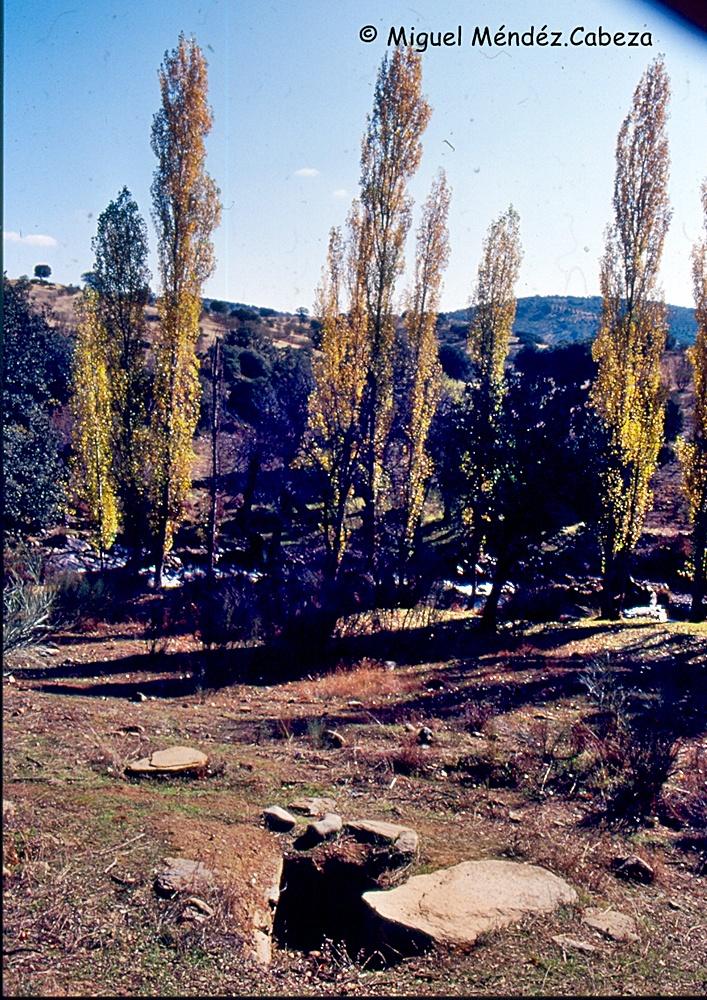 Sepultura tardorromana violada del Prado de las Monedas cerca de Los Villarejos, bajo el embalse de Alcaudete en el Jébalo