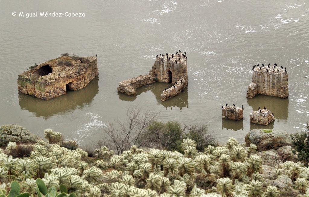 Restos de los molinos de daicán sobre el Tajo en Toledo