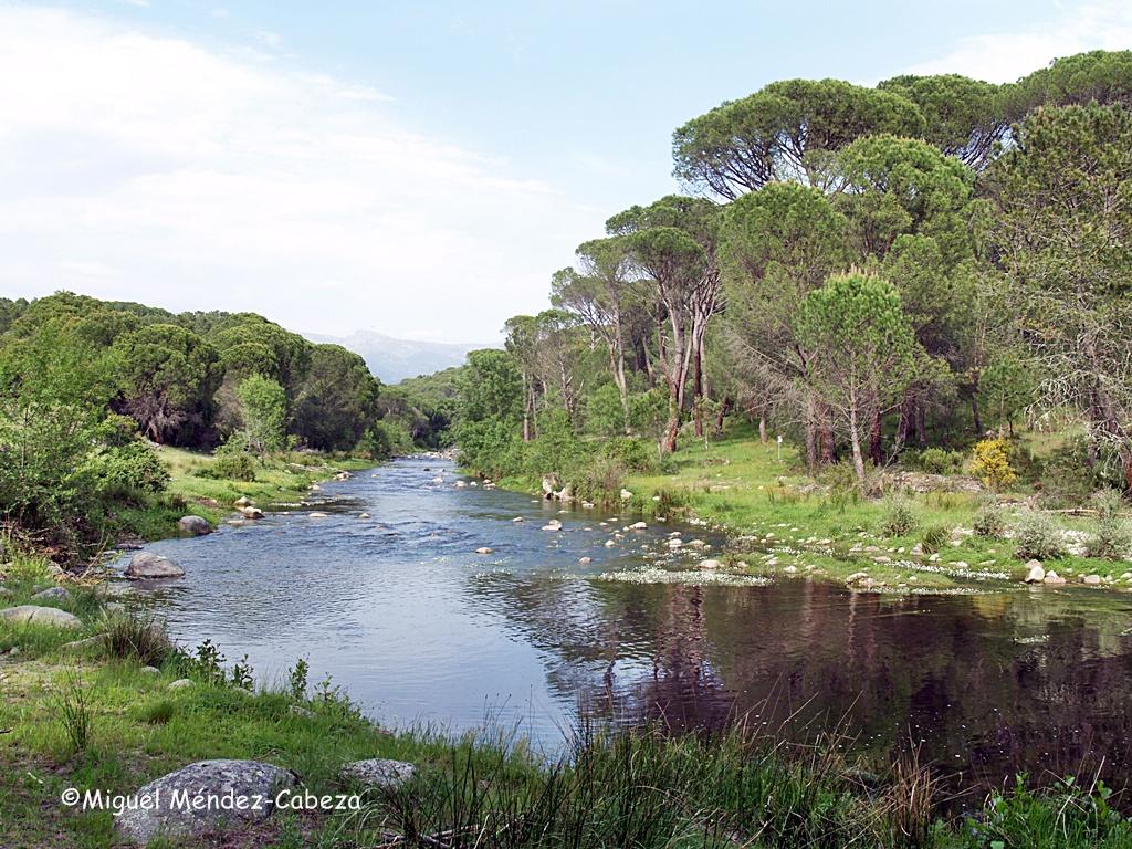 El Tiétar a su paso por los pinares de La Iglesuela