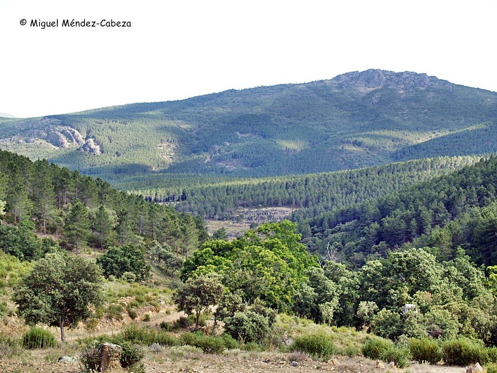 Pinares robledales de Vallecasar, al otro lado del risco Ñañas
